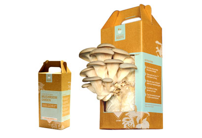 back-to-the-roots-mushroom-kit